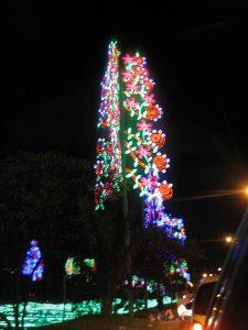 Medellin-2012-Dic-Sayndra-324