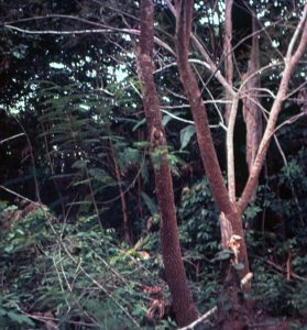 F-04919-Indigenas-Yanomami-Amazonas-Venezuela-1966-Carmen-Dyna-Guitian-Pedrosa