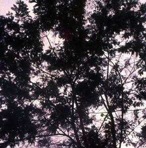 F-04920-Indigenas-Yanomami-Amazonas-Venezuela-1966-Carmen-Dyna-Guitian-Pedrosa