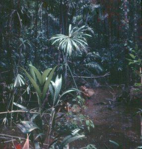 F-04921-Indigenas-Yanomami-Amazonas-Venezuela-1966-Carmen-Dyna-Guitian-Pedrosa