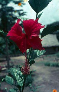 F-04924-Indigenas-Yanomami-Amazonas-Venezuela-1966-Carmen-Dyna-Guitian-Pedrosa