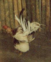 F-01890-TdC-0228-Cruz-M-Chaguaramal-1987-IPC-UPEL