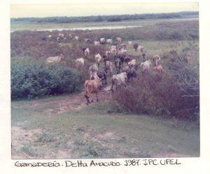 F-02210-Waraos-Tucupita-Delta-Amacuro-1987-IPC-UPEL