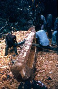F-04850-Indigenas-Piaroa-Venezuela-1979-CONAC-INIDEF