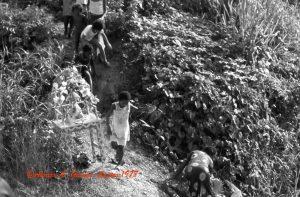 1978 Farriar-Tambor de San Juan036 2 copy