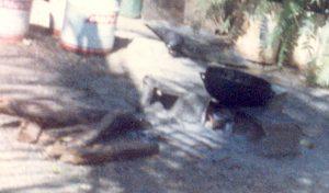 F-06877-Fiesta-Infantil-El-Sombrero-1989-IPC-UPEL